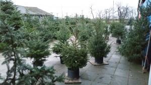 Kerstbomen op het plein - www.hobbyveld.nl