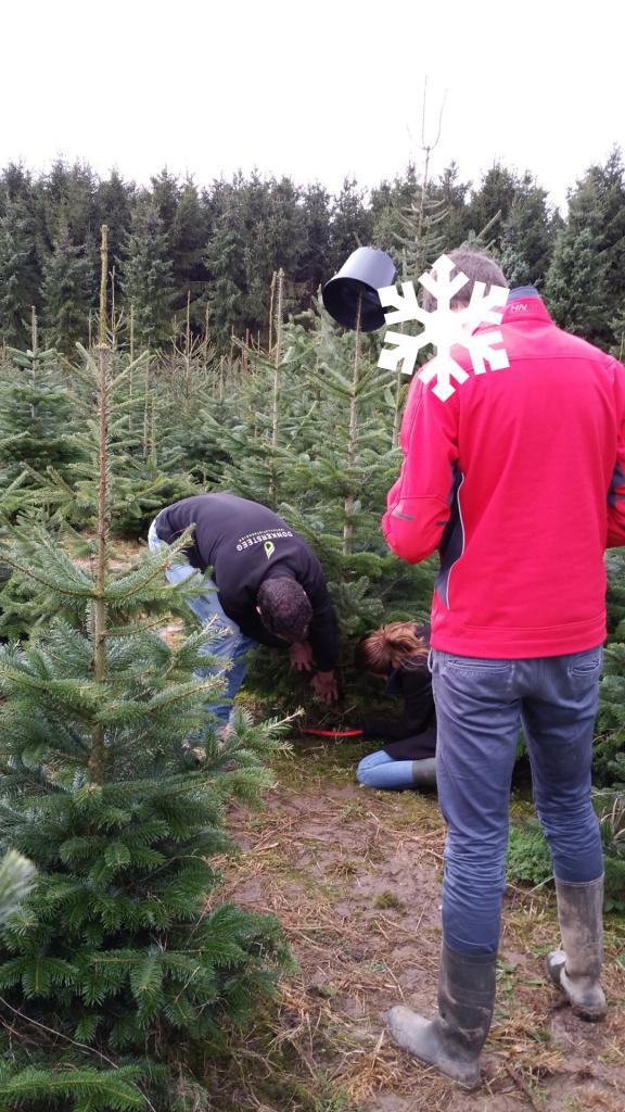 kerstboom-te-koop-www-hobbyveld-1