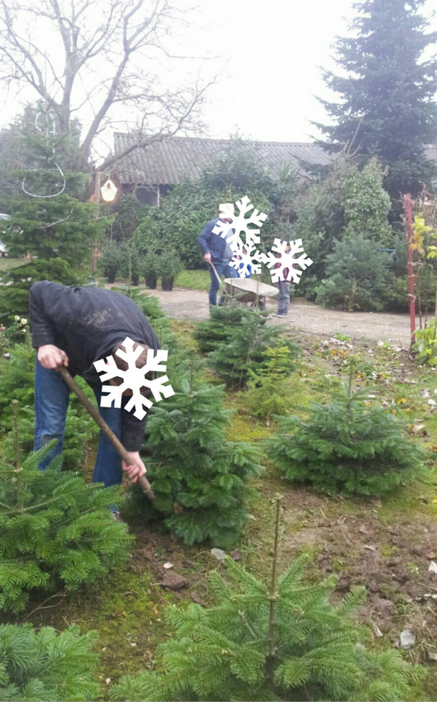 kerstboom-te-koop-www-hobbyveld-3