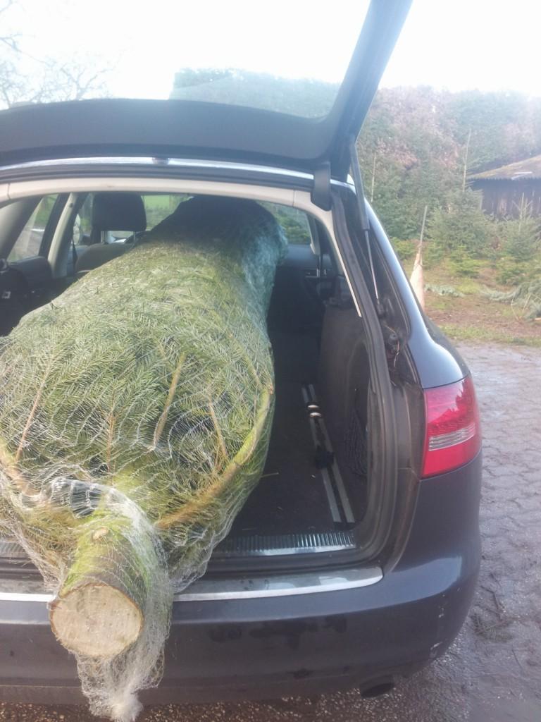 kerstbomen-zelf-omhakken-mogelijk-www-hobbyveld-4